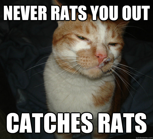 never rats you out catches rats - Cool Cat Craig