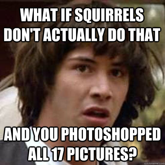 what if squirrels dont actually do that and you photoshoppe - conspiracy keanu