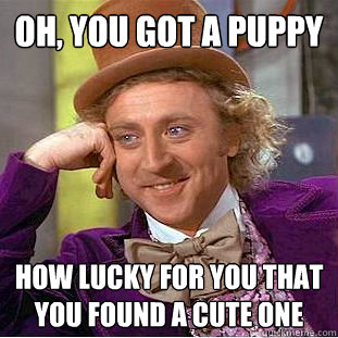 oh you got a puppy how lucky for you that you found a cute  - Creepy Wonka