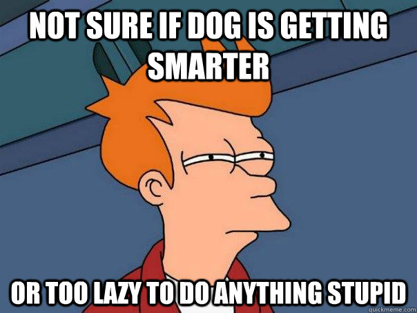not sure if dog is getting smarter or too lazy to do anythin - Futurama Fry