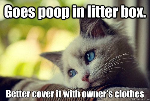 goes poop in litter box better cover it with owners clothe - First World Cat Problems