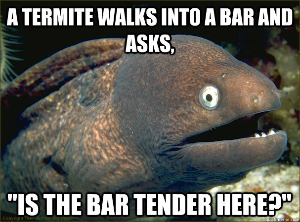 a termite walks into a bar and asks is the bar tender here - Bad Joke Eel