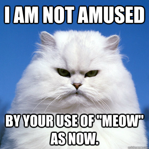 i am not amused by your use of meow as now - Right Meow