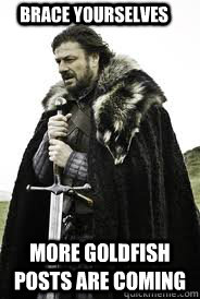brace yourselves more goldfish posts are coming - Brace Yourselves