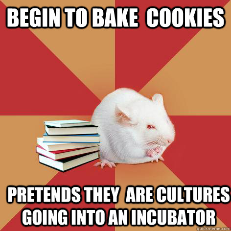 begin to bake cookies pretends they are cultures going int - Science Major Mouse