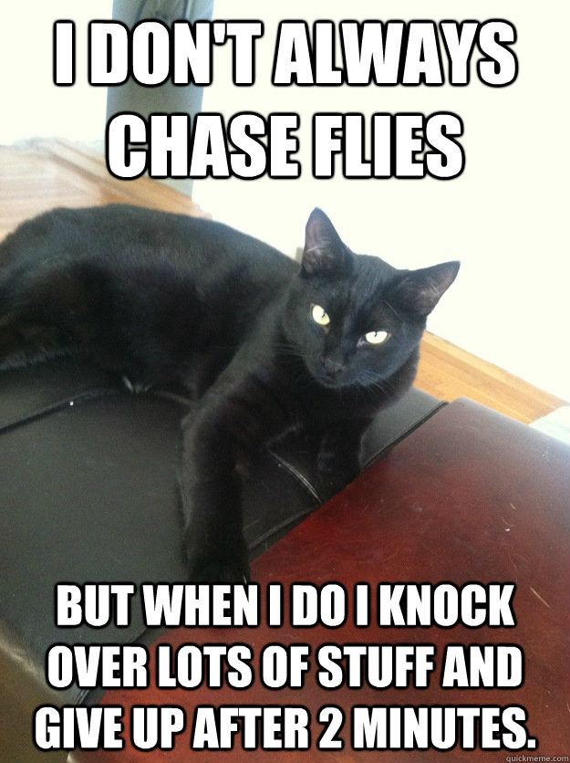 i dont always chase flies but when i do i knock over lots o - most interesting fly hunter