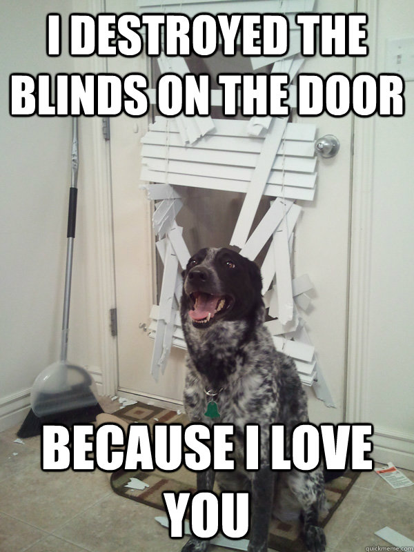 i destroyed the blinds on the door because i love you - It wont happen again. I promise