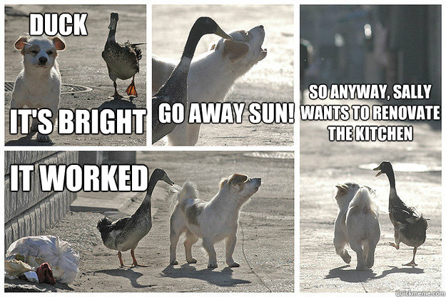 duck its bright go away sun it worked so anyway sally wan - 
