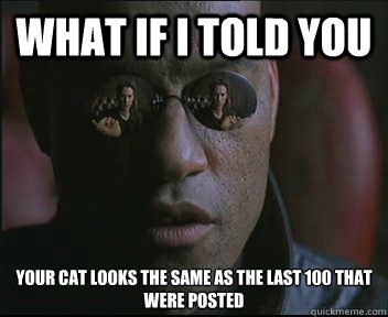 what if i told you your cat looks the same as the last 100 t - Morpheus SC