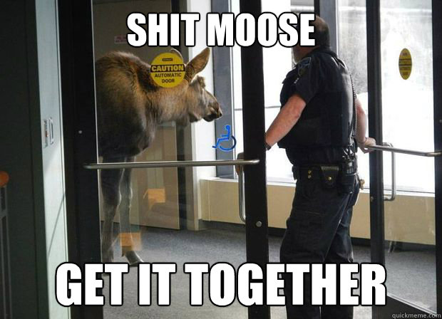 shit moose get it together - 