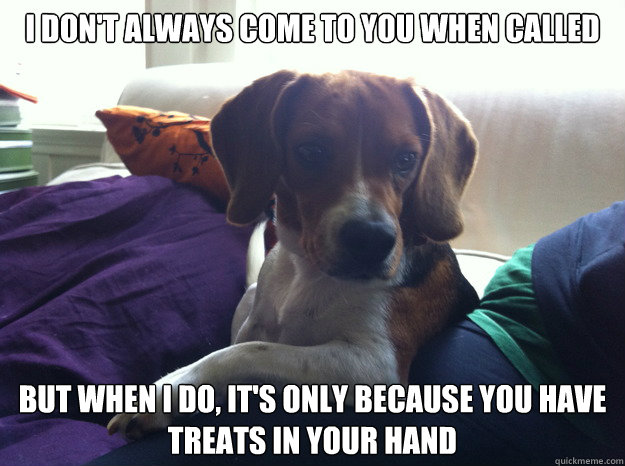 i dont always come to you when called but when i do its o - The Most Interesting Beagle In The World