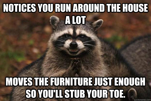 notices you run around the house a lot moves the furniture j - Evil Plotting Raccoon