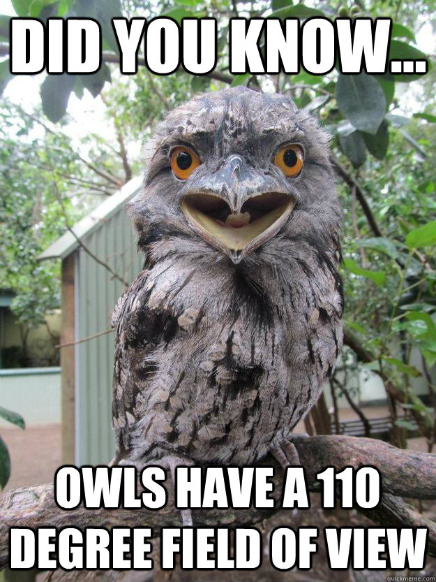 did you know owls have a 110 degree field of view - Annoying Fact Owl