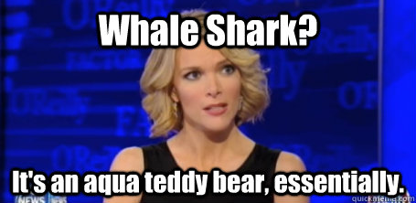 whale shark its an aqua teddy bear essentially  - megyn kelly fox news