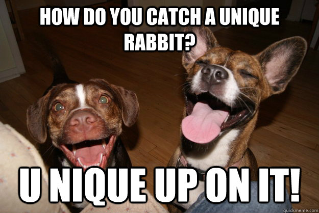 how do you catch a unique rabbit u nique up on it - Clean Joke Puppies