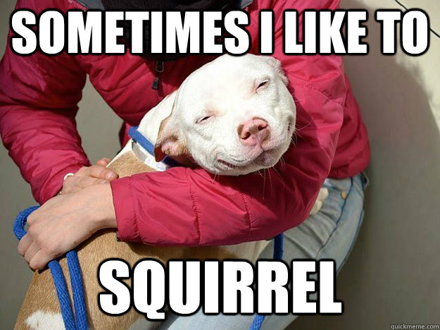 sometimes i like to squirrel - 10 dog