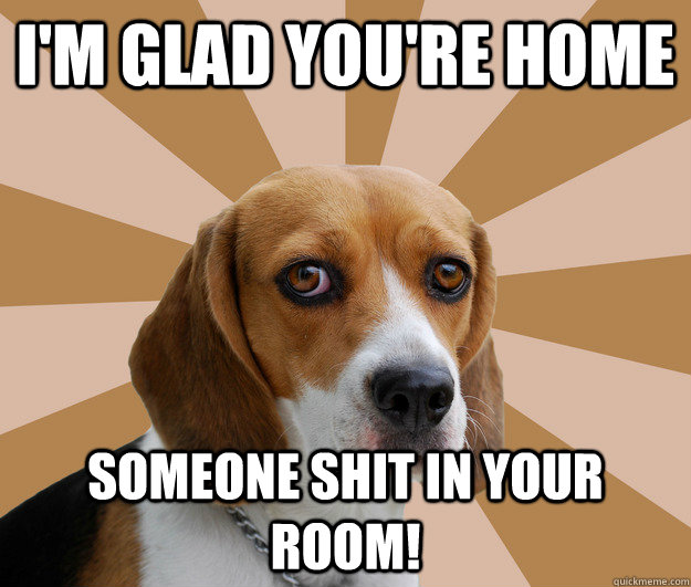 Funny Beagle Quotes. QuotesGram