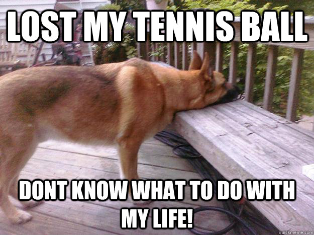 lost my tennis ball dont know what to do with my life - First World Dog problems