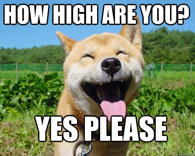 Yes Please Funny Meme : How high are you yes please misc quickmeme
