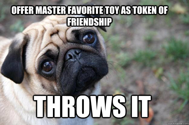 offer master favorite toy as token of friendship throws it - First World Dog Problems