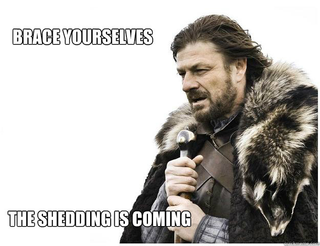 brace yourselves the shedding is coming - Imminent Ned