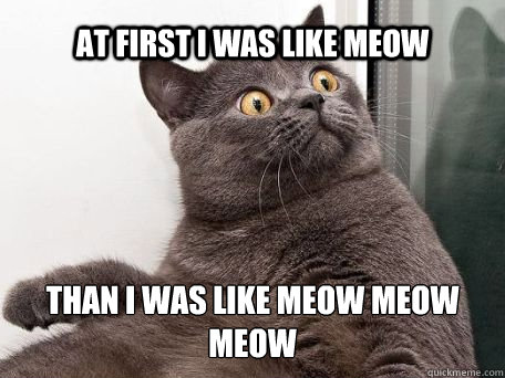 at first i was like meow than i was like meow meow meow - conspiracy cat