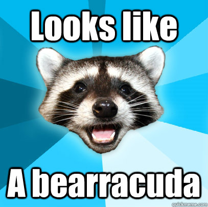 looks like a bearracuda - Lame Pun Coon