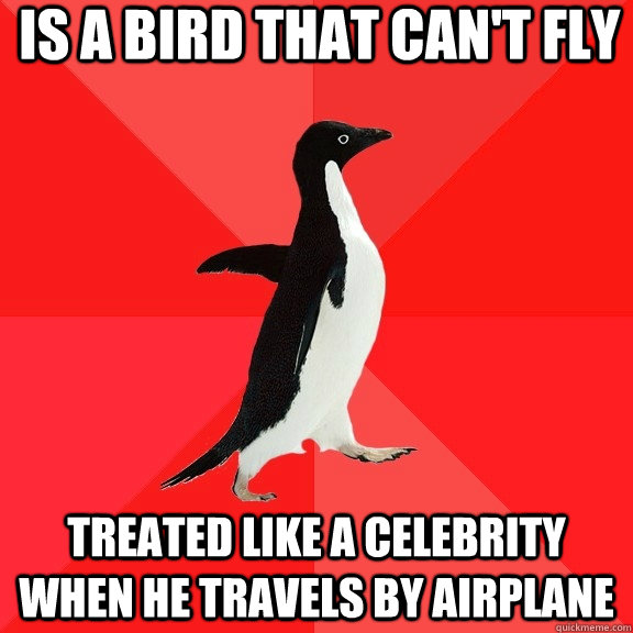 is a bird that cant fly treated like a celebrity when he tr - Socially Awesome Penguin