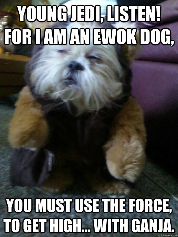 young jedi listen for i am an ewok dog you must use the f - mah dawg knows sup