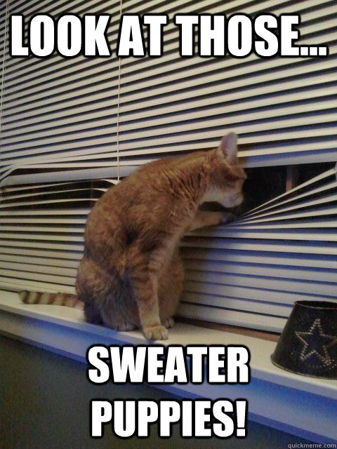 look at those sweater puppies - Peeping Tomcat