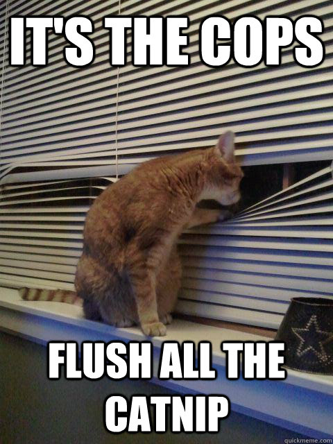 its the cops flush all the catnip - Peeping Tomcat