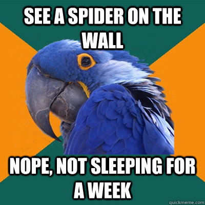 see a spider on the wall nope not sleeping for a week - Paranoid Parrot