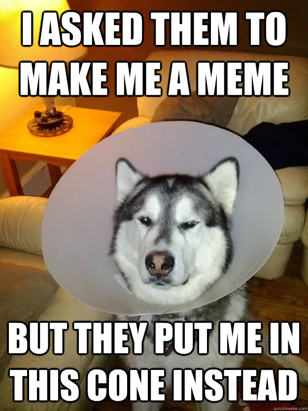 Disappointed Dog Meme