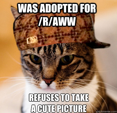 was adopted for raww refuses to take a cute picture - Scumbag Cat