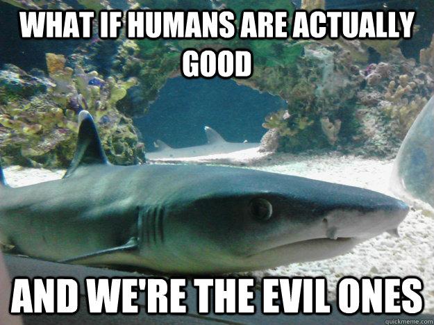 The 25 Funniest Shark Memes Complex