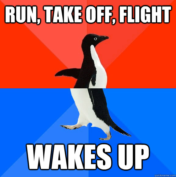 run take off flight wakes up - Socially Awesome Awkward Penguin