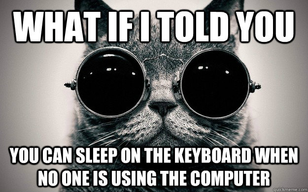 what if i told you you can sleep on the keyboard when no one - Morpheus Cat Facts
