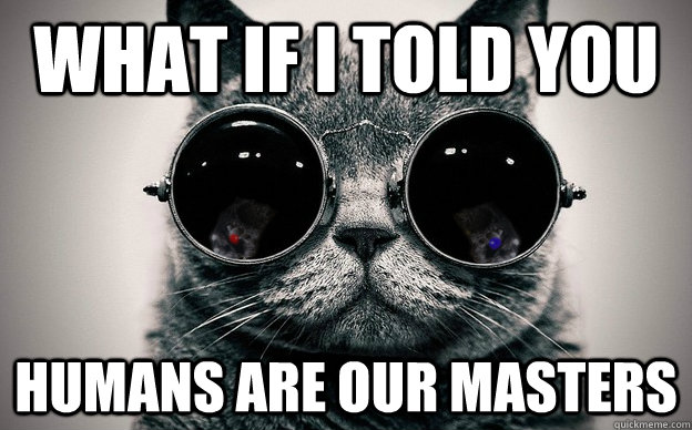 what if i told you humans are our masters - Cat morpheus plus paws