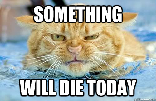 something will die today - Angry cat is angry