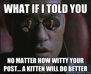 what if i told you no matter how witty your post a kitten - Morpheus SC