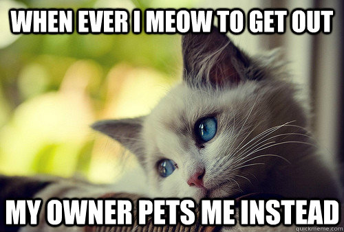 when ever i meow to get out my owner pets me instead - First World Cat Problems