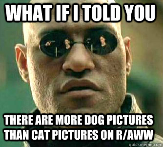 what if i told you there are more dog pictures than cat pict - Matrix Morpheus