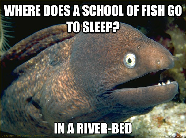 where does a school of fish go to sleep in a riverbed - Bad Joke Eel