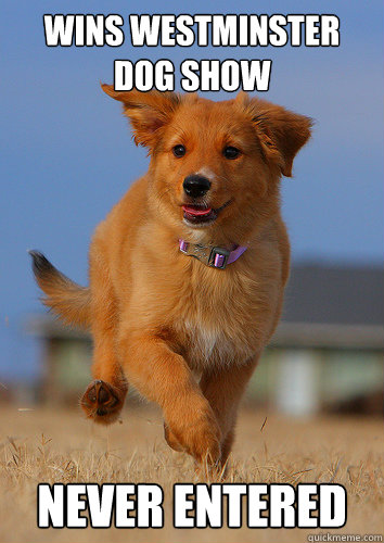 wins westminster dog show never entered - Ridiculously Photogenic Puppy