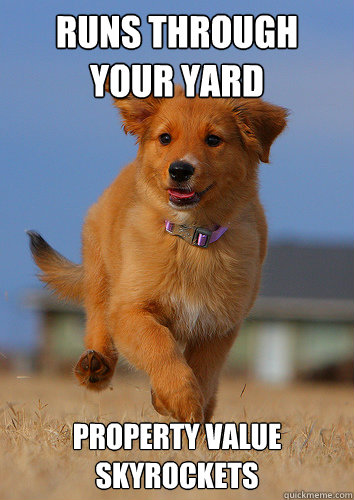 runs through your yard property value skyrockets - Ridiculously Photogenic Puppy