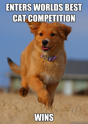 enters worlds best cat competition wins - Ridiculously Photogenic Puppy