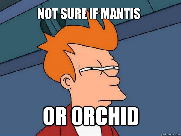 not sure if mantis or orchid - Futurama Fry