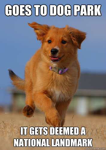 goes to dog park it gets deemed a national landmark - Ridiculously Photogenic Puppy