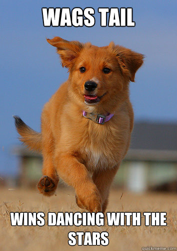 wags tail wins dancing with the stars - Ridiculously Photogenic Puppy