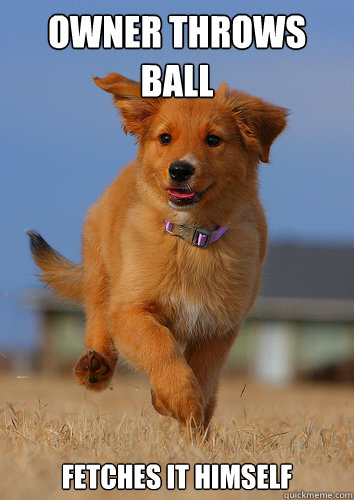owner throws ball fetches it himself - Ridiculously Photogenic Puppy
